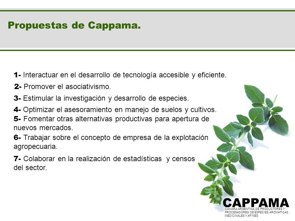 CAPPAMA CAPPAMA Propuestas de Cappama.