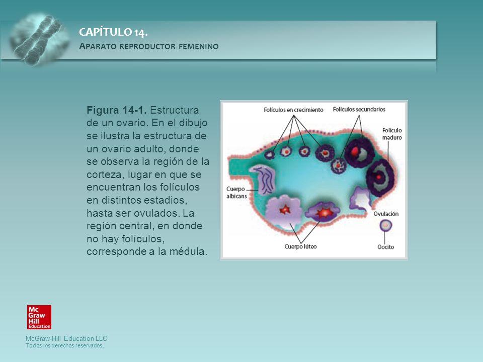 Figura 14-1. Estructura de un ovario