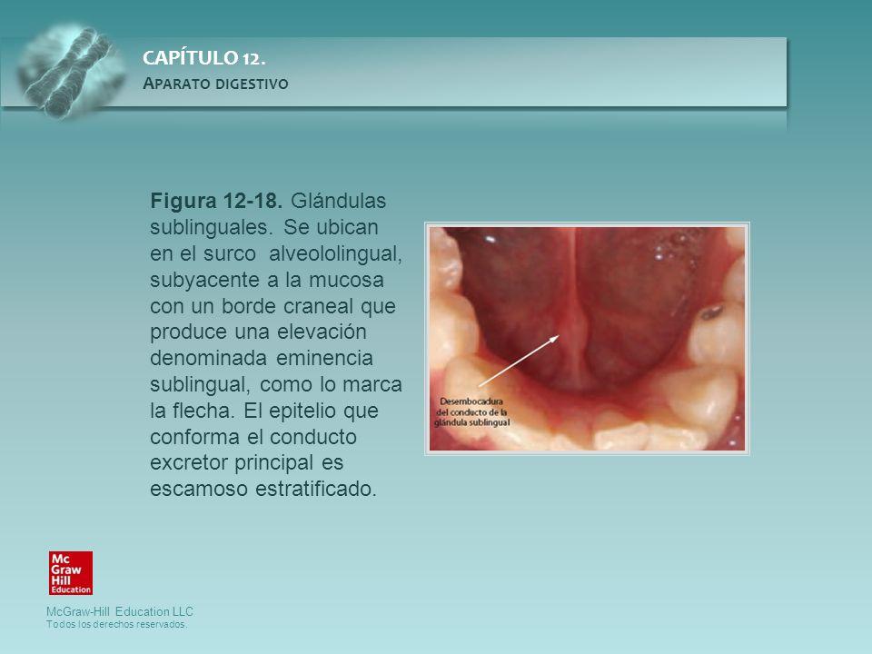 Figura 12-18. Glándulas sublinguales