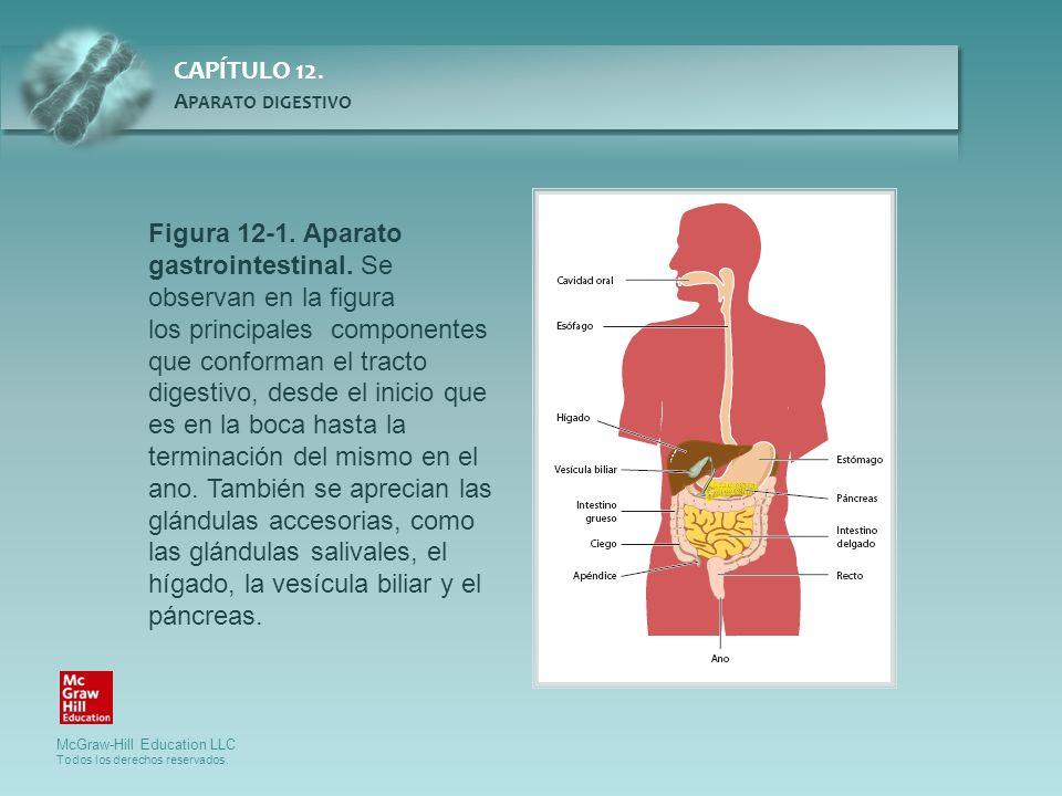 Figura 12-1. Aparato gastrointestinal. Se observan en la figura