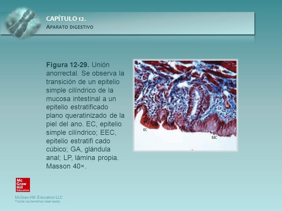 Figura 12-29. Unión anorrectal