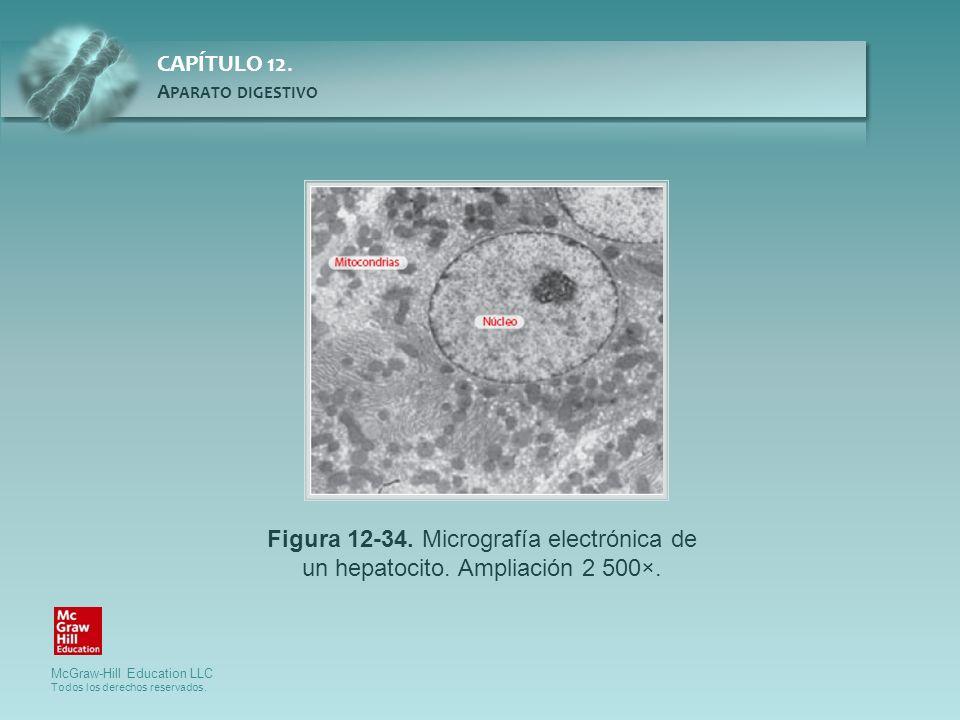 Figura 12-34. Micrografía electrónica de un hepatocito