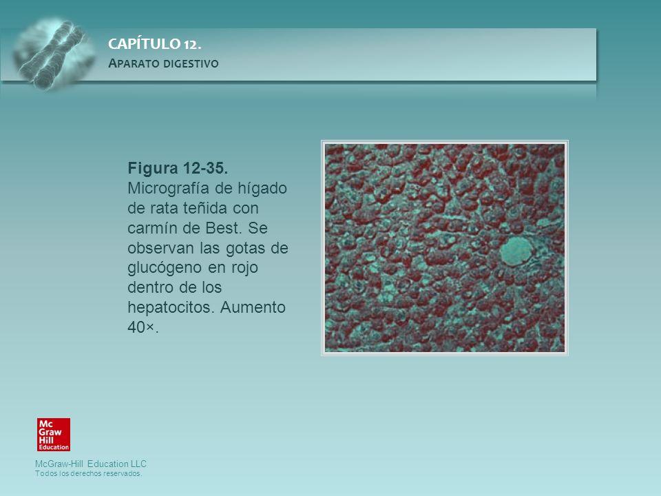 Figura 12-35. Micrografía de hígado de rata teñida con carmín de Best