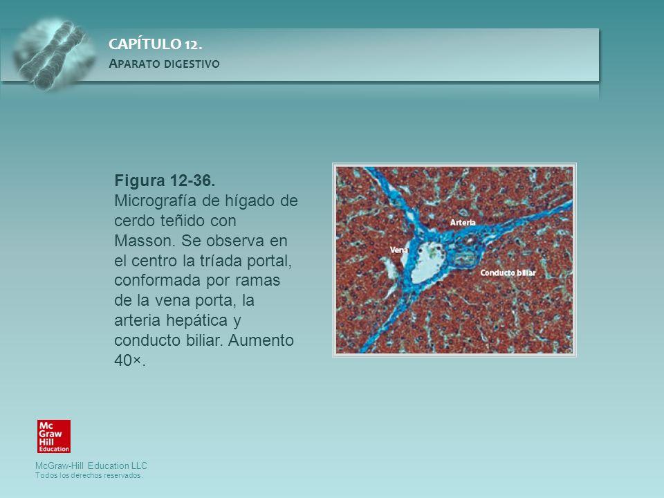Figura 12-36. Micrografía de hígado de cerdo teñido con Masson