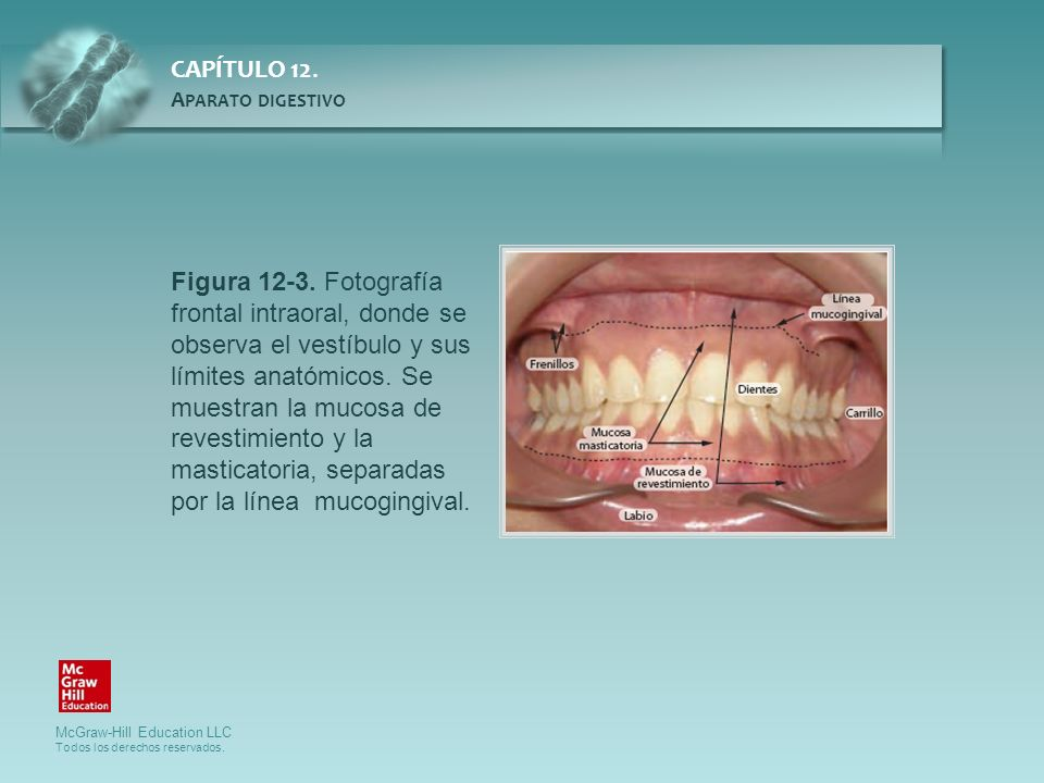 Figura 12-3.Fotografía frontal intraoral, donde se observa el vestíbulo y sus límites anatómicos.