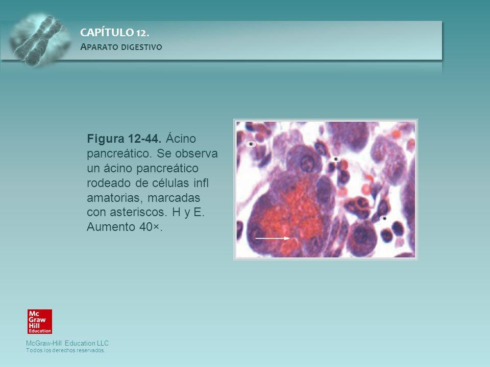 Figura 12-44. Ácino pancreático. Se observa un ácino pancreático