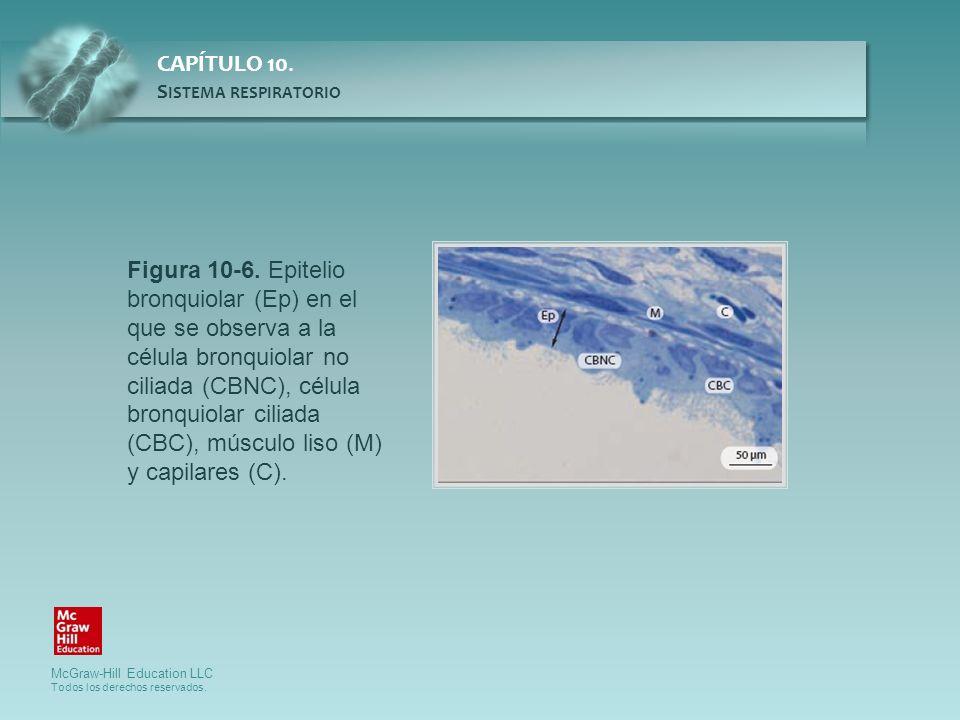 Figura 10-6. Epitelio bronquiolar (Ep) en el que se observa a la