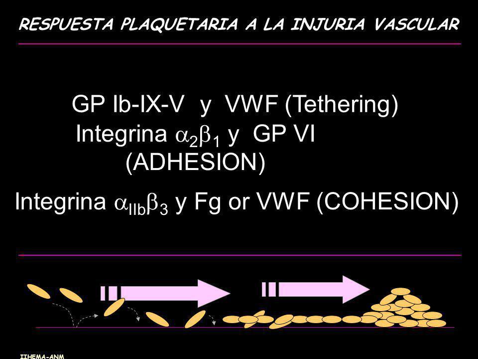 GP Ib-IX-V y VWF (Tethering) Integrina 21 y GP VI (ADHESION)