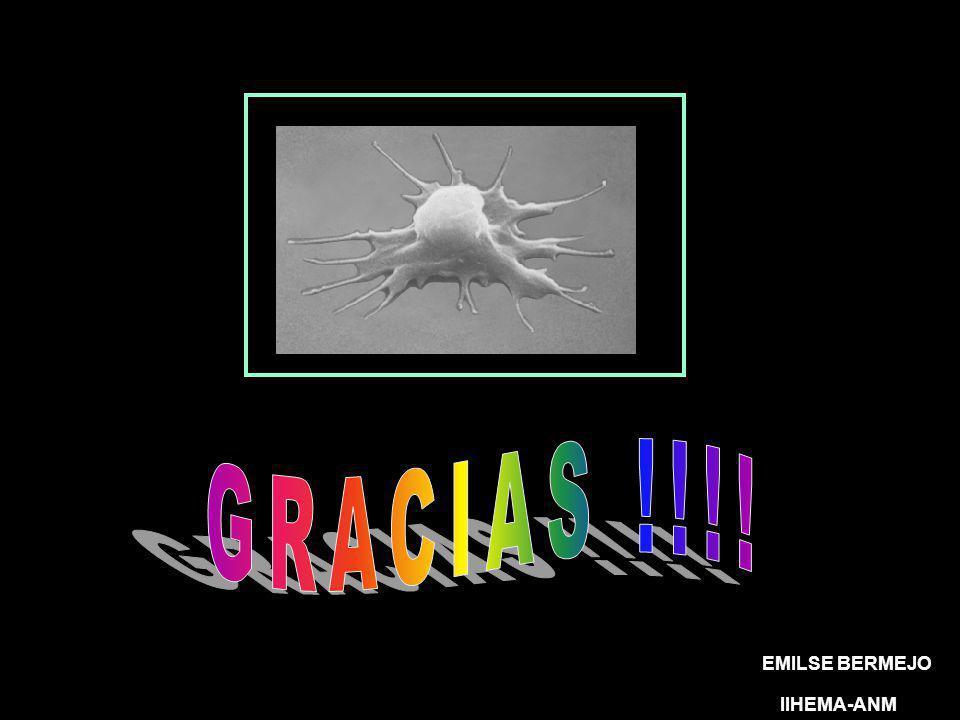 GRACIAS !!!! EMILSE BERMEJO IIHEMA-ANM