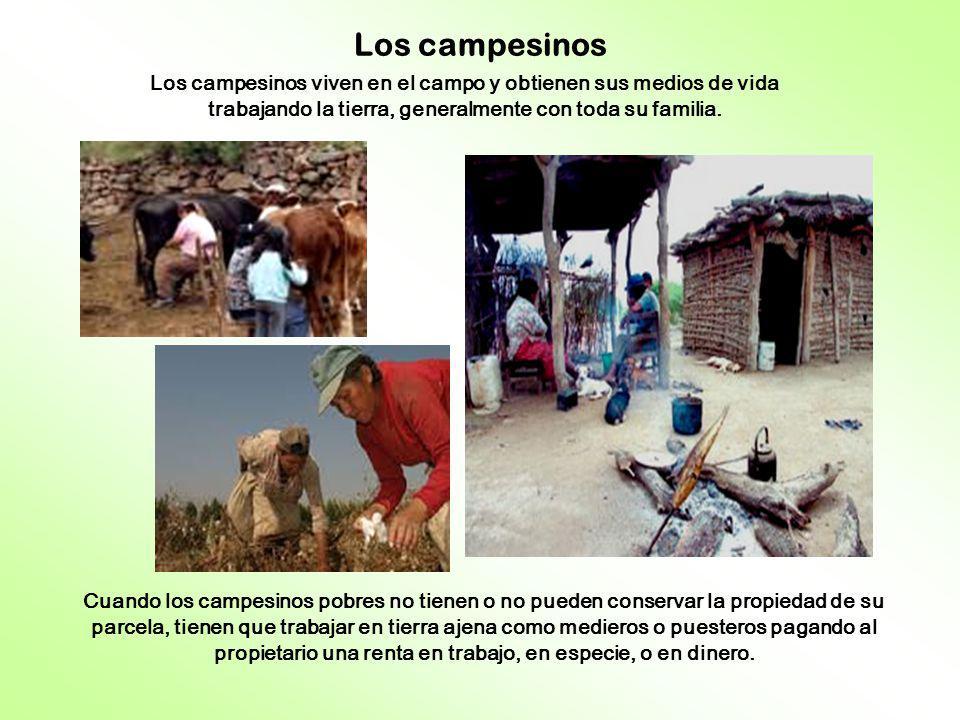 Los campesinos Los campesinos viven en el campo y obtienen sus medios de vida trabajando la tierra, generalmente con toda su familia.