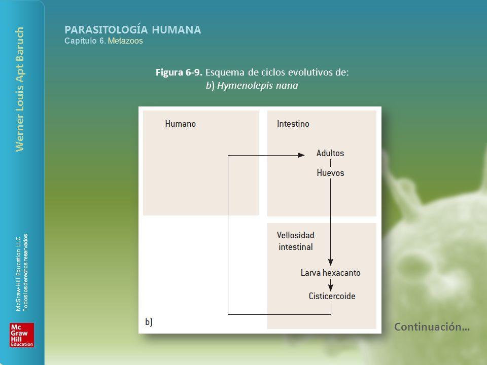 Figura 6-9. Esquema de ciclos evolutivos de: