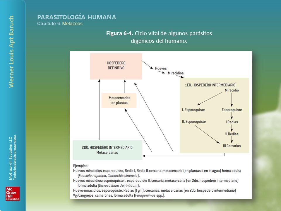 Figura 6-4. Ciclo vital de algunos parásitos digénicos del humano.