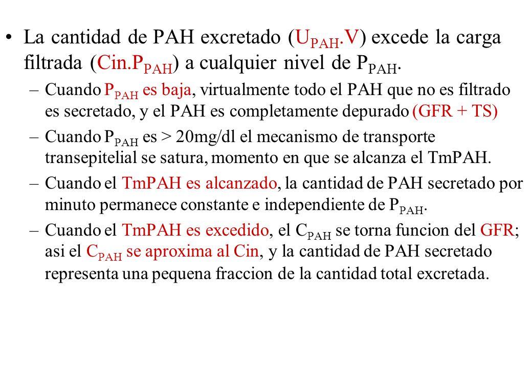 La cantidad de PAH excretado (UPAH. V) excede la carga filtrada (Cin