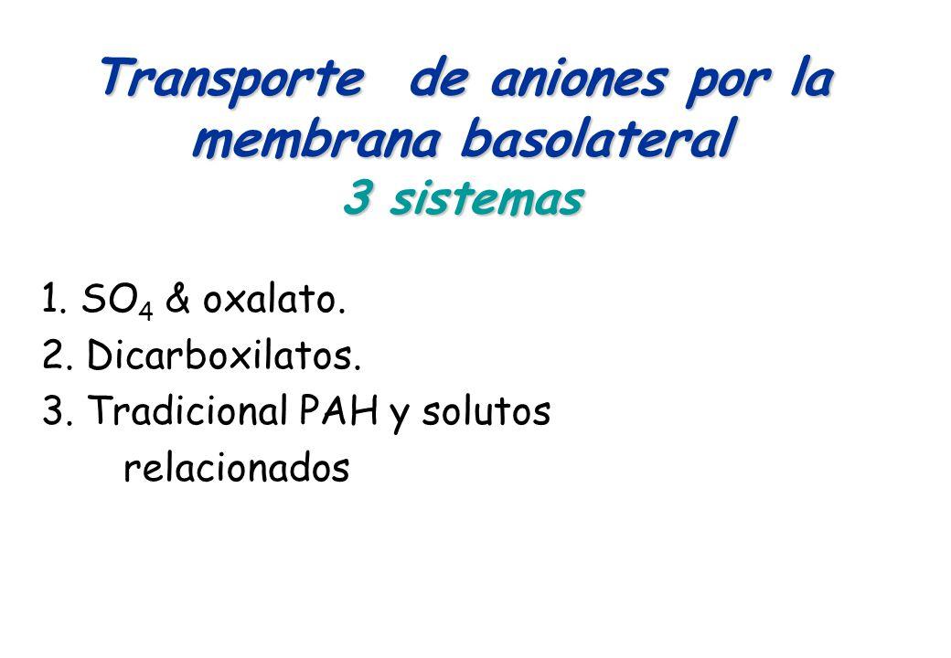 Transporte de aniones por la membrana basolateral 3 sistemas