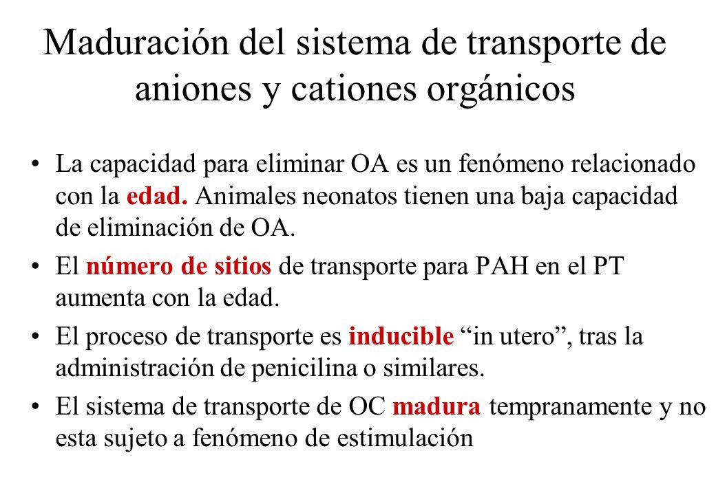 Maduración del sistema de transporte de aniones y cationes orgánicos