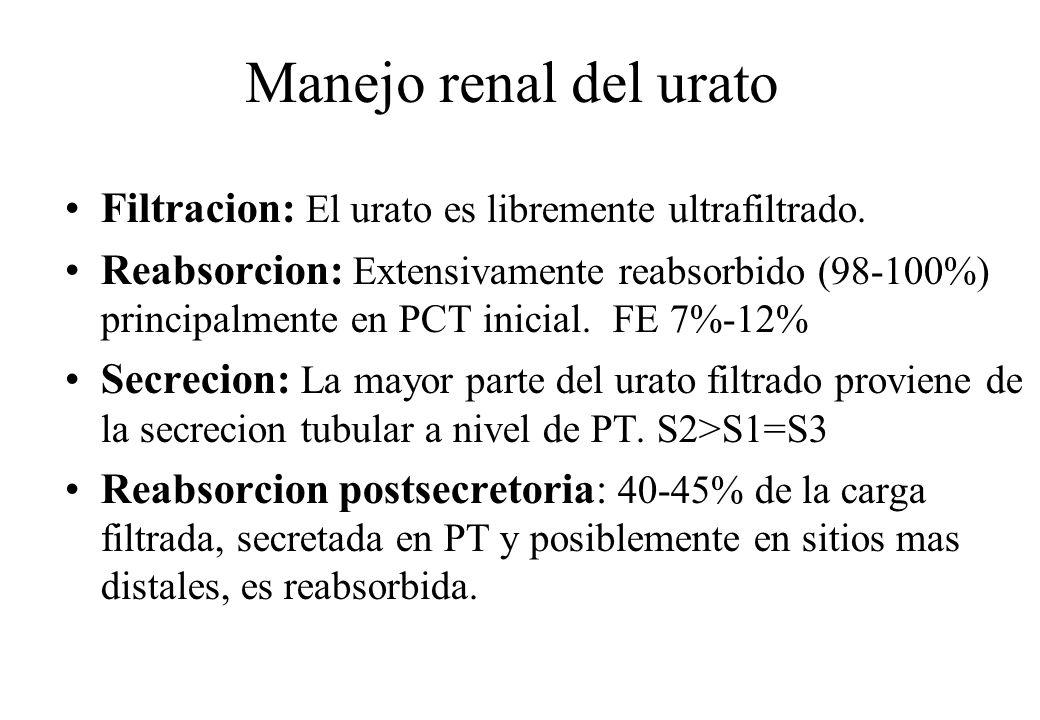 Manejo renal del urato Filtracion: El urato es libremente ultrafiltrado.