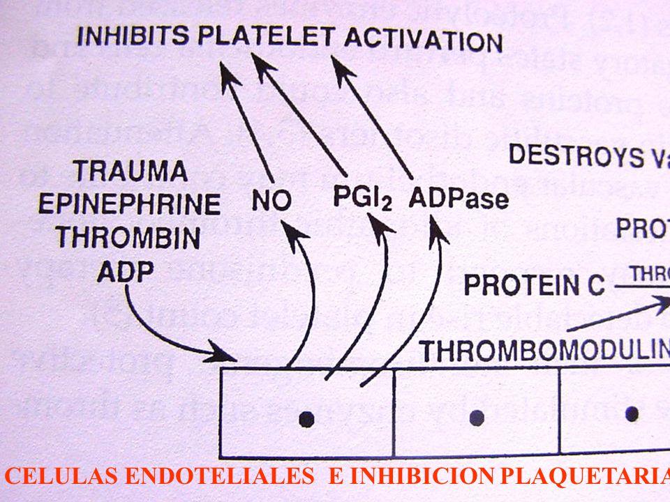CELULAS ENDOTELIALES E INHIBICION PLAQUETARIA