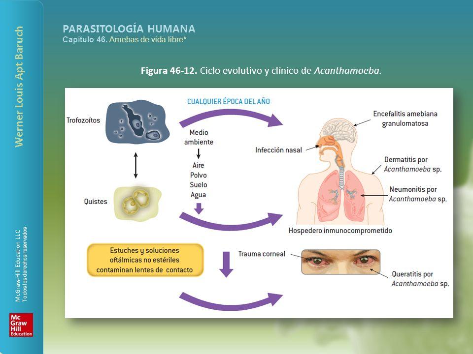 Figura 46-12. Ciclo evolutivo y clínico de Acanthamoeba.