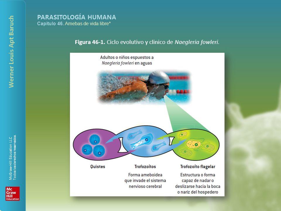 Figura 46-1. Ciclo evolutivo y clinico de Naegleria fowleri.