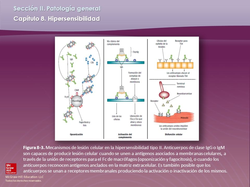 Figura 8-3. Mecanismos de lesión celular en la hipersensibilidad tipo II.