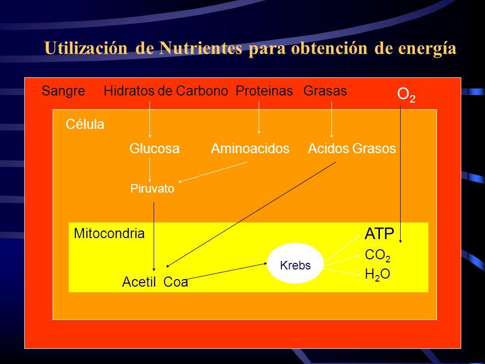 Utilización de Nutrientes para obtención de energía
