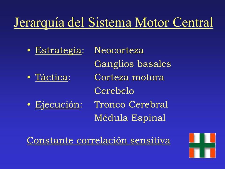 Jerarquía del Sistema Motor Central