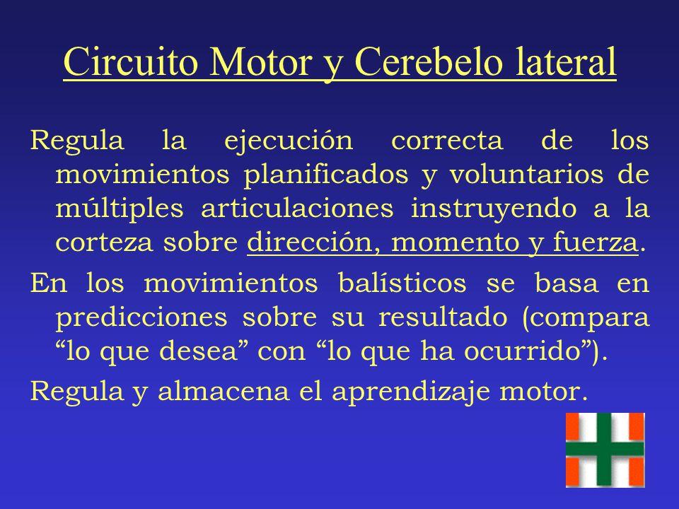 Circuito Motor y Cerebelo lateral