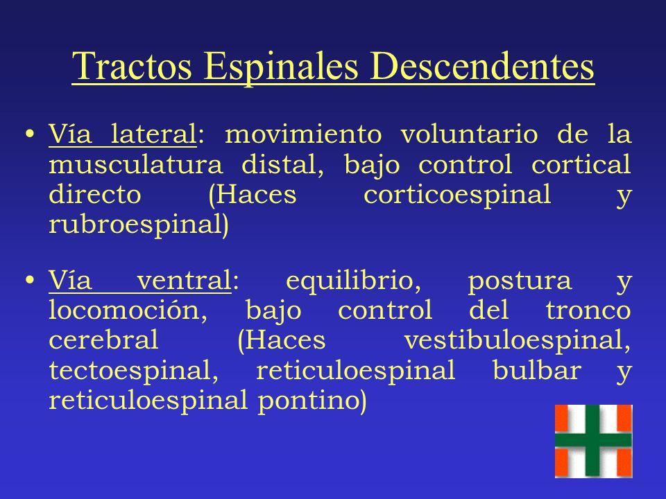 Tractos Espinales Descendentes