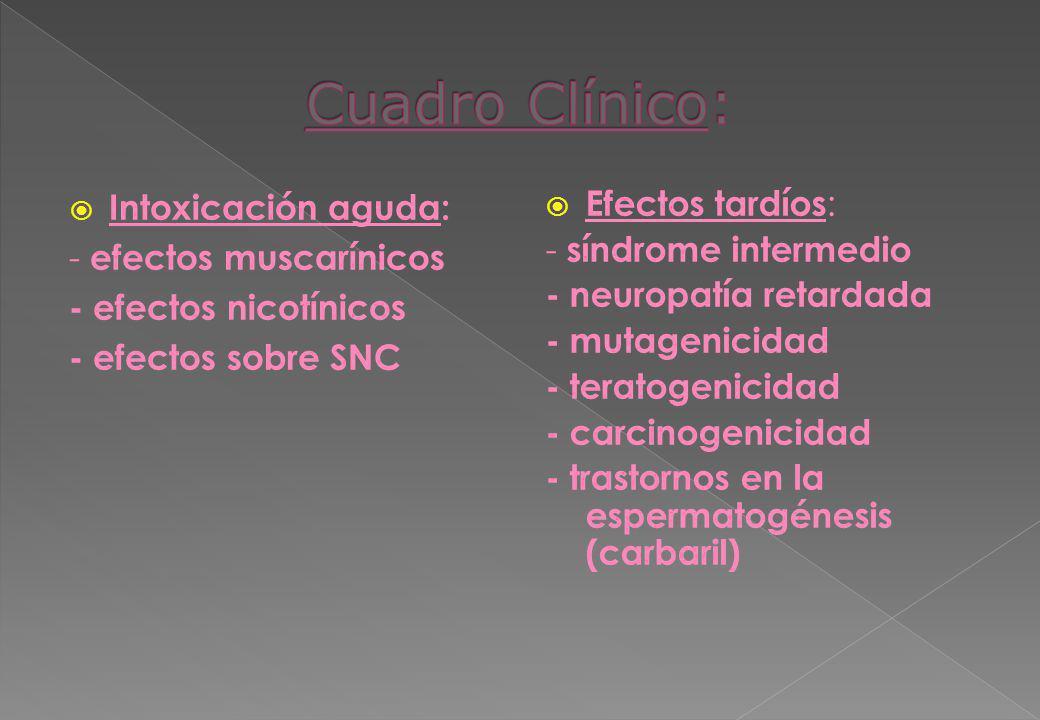 Cuadro Clínico: Intoxicación aguda: - efectos muscarínicos