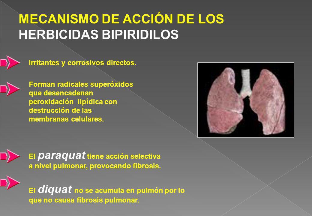 MECANISMO DE ACCIÓN DE LOS HERBICIDAS BIPIRIDILOS