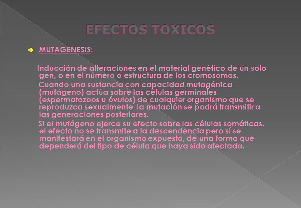EFECTOS TOXICOS MUTAGENESIS: