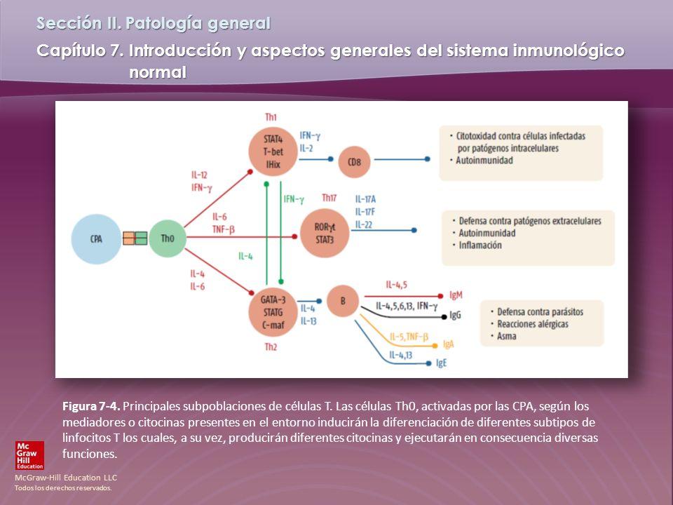 Figura 7-4. Principales subpoblaciones de células T