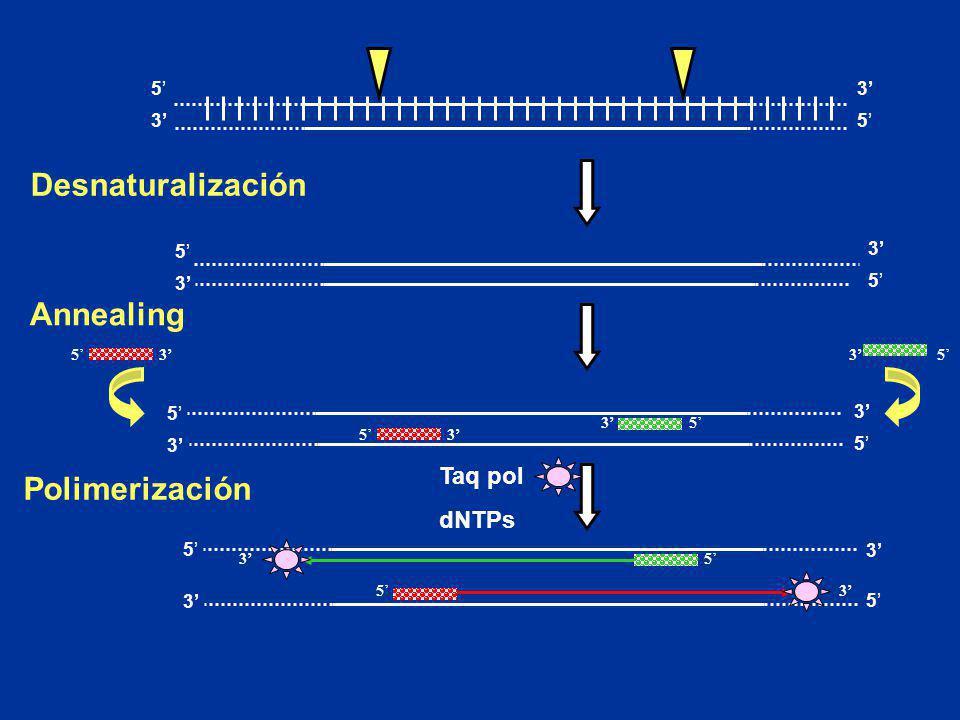 Desnaturalización Annealing