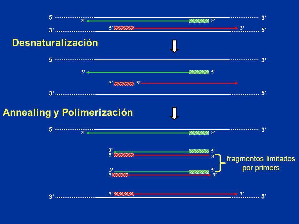 Annealing y Polimerización