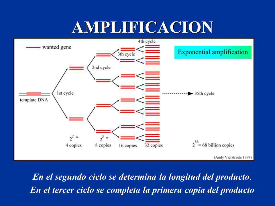 En el tercer ciclo se completa la primera copia del producto
