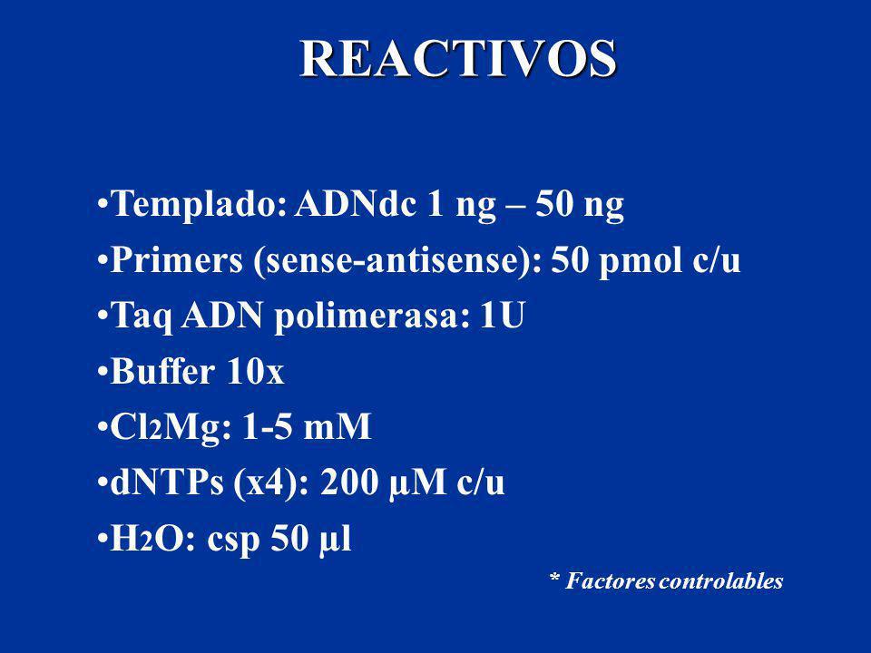 REACTIVOS Templado: ADNdc 1 ng – 50 ng