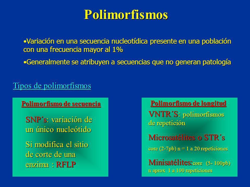 Polimorfismos Tipos de polimorfismos