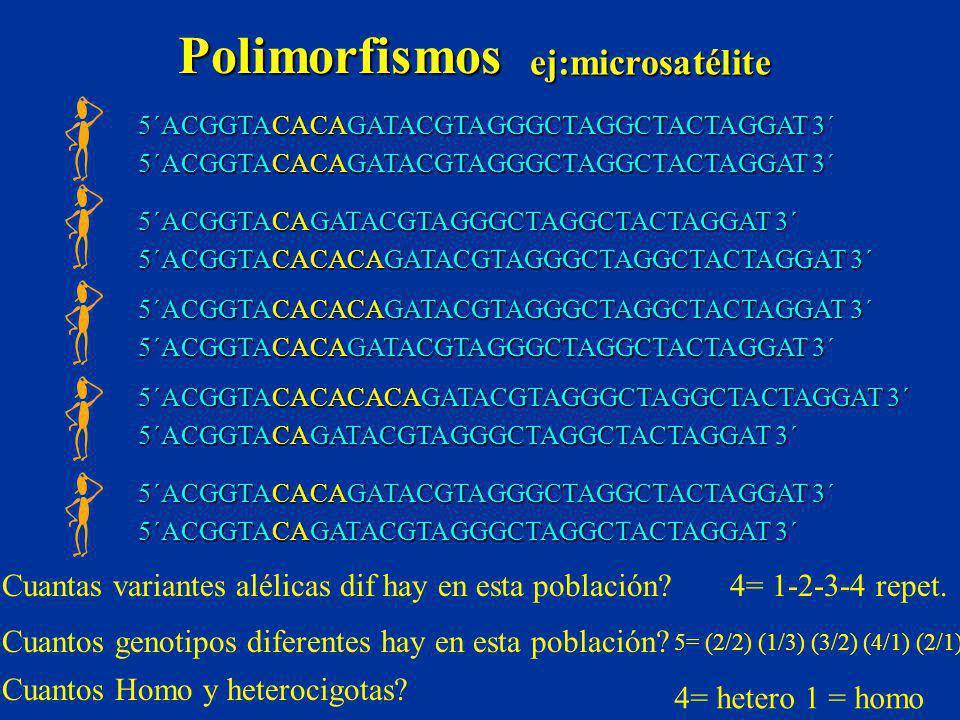 Polimorfismos ej:microsatélite