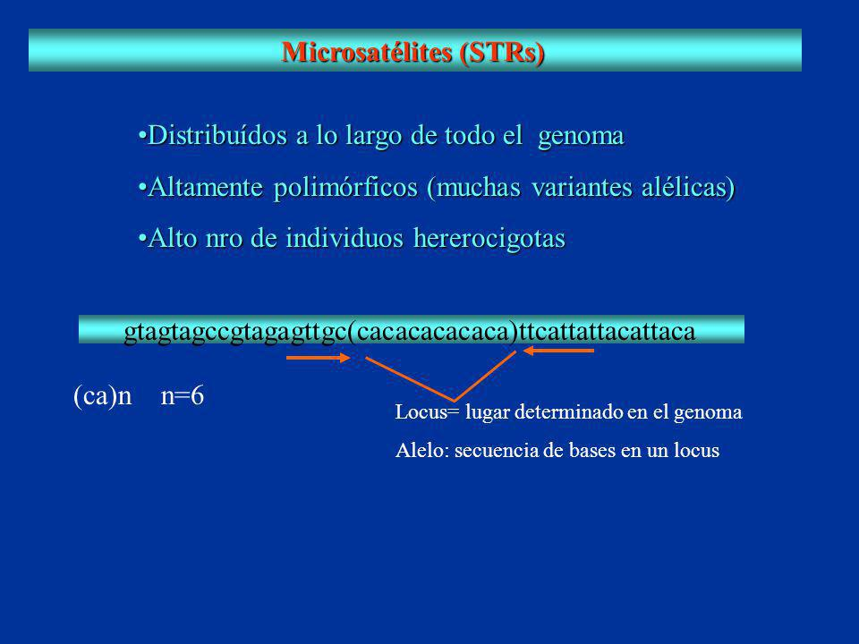 Microsatélites (STRs)
