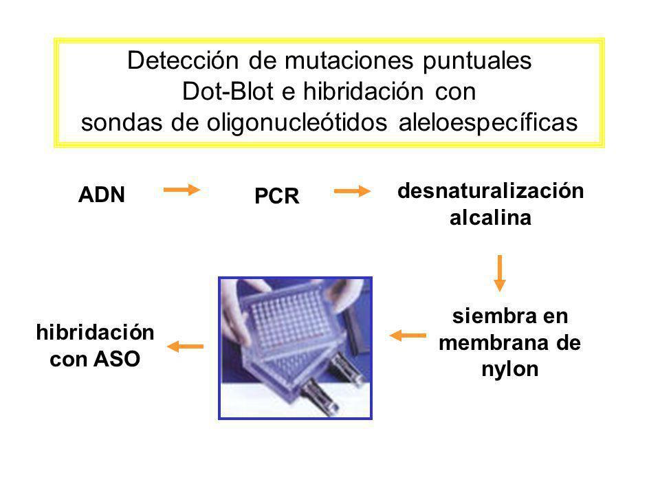 desnaturalización alcalina siembra en membrana de nylon