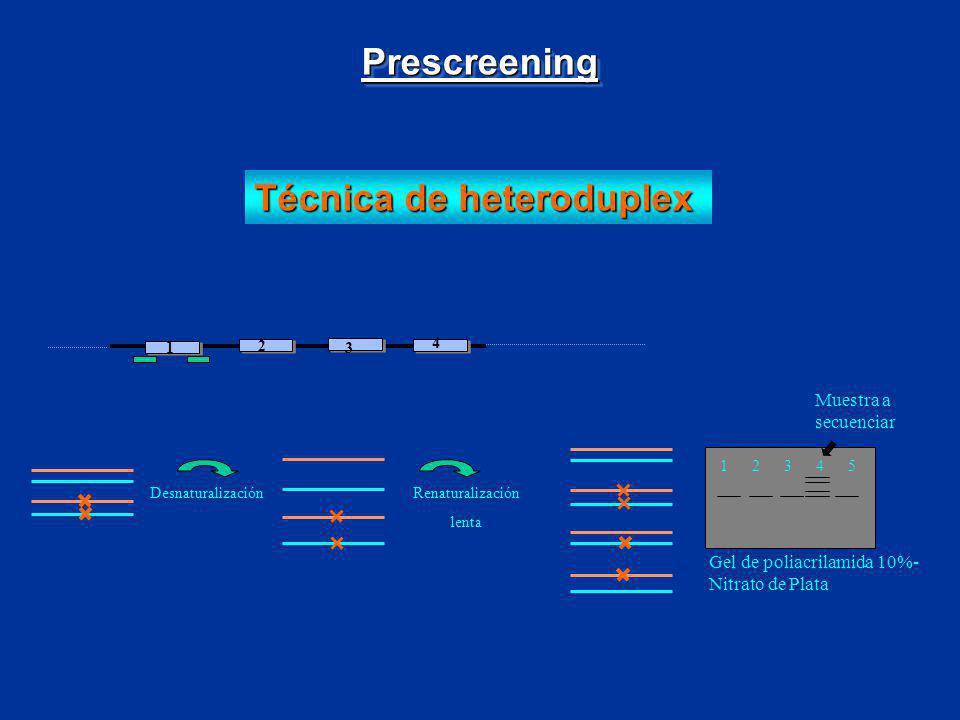 Técnica de heteroduplex