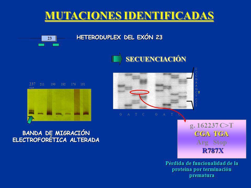 MUTACIONES IDENTIFICADAS