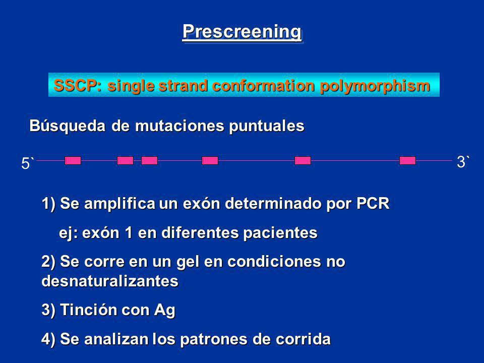 Prescreening SSCP: single strand conformation polymorphism