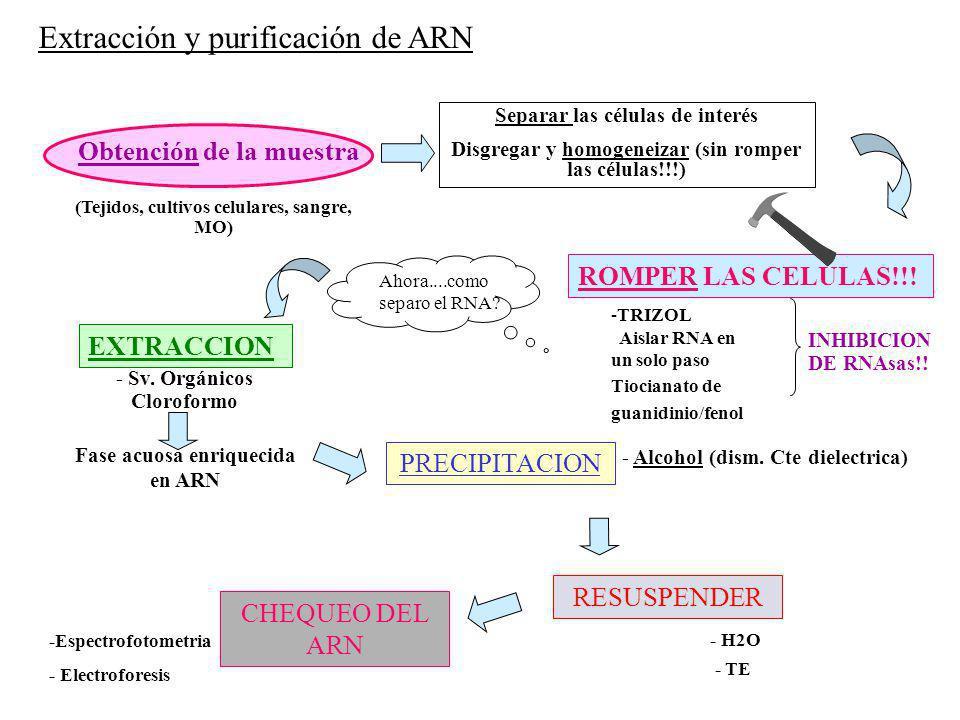 Extracción y purificación de ARN
