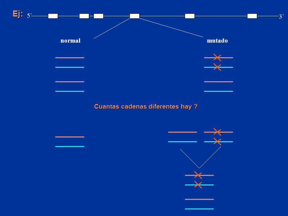 Ej: 5` 3` normal mutado Cuantas cadenas diferentes hay