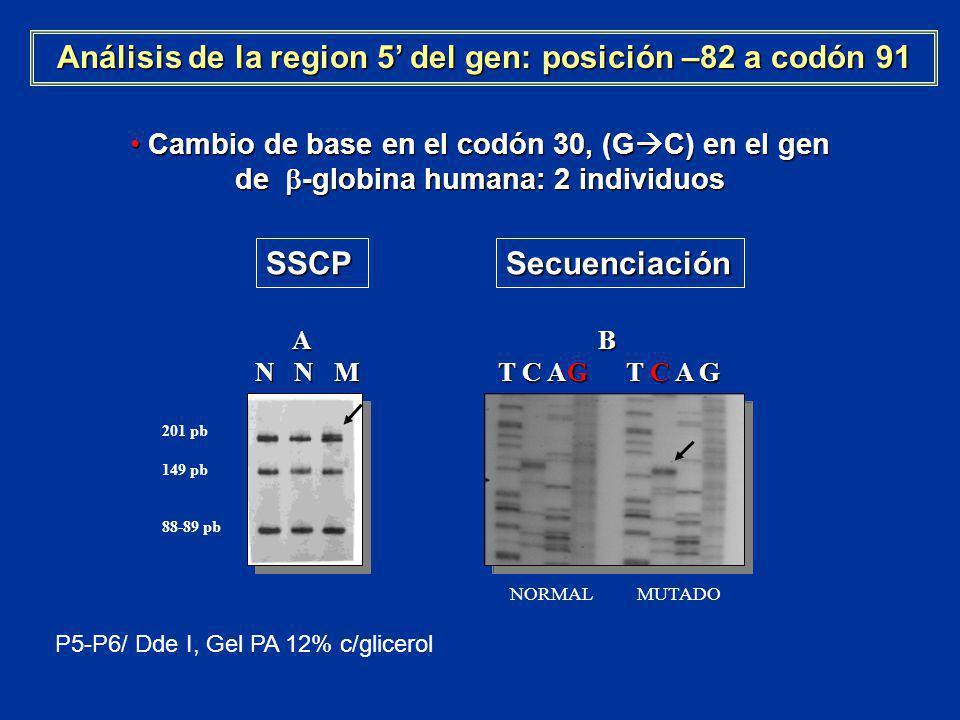 Análisis de la region 5' del gen: posición –82 a codón 91