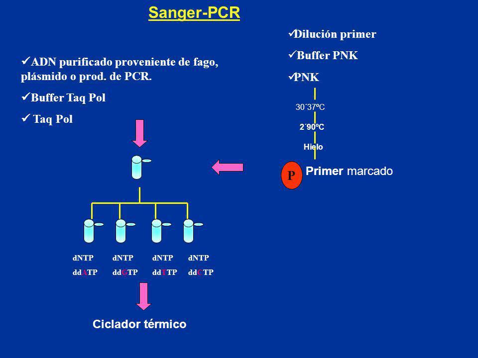 Sanger-PCR P Dilución primer Buffer PNK PNK