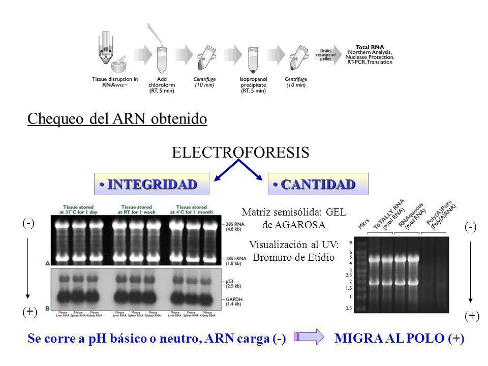 Chequeo del ARN obtenido