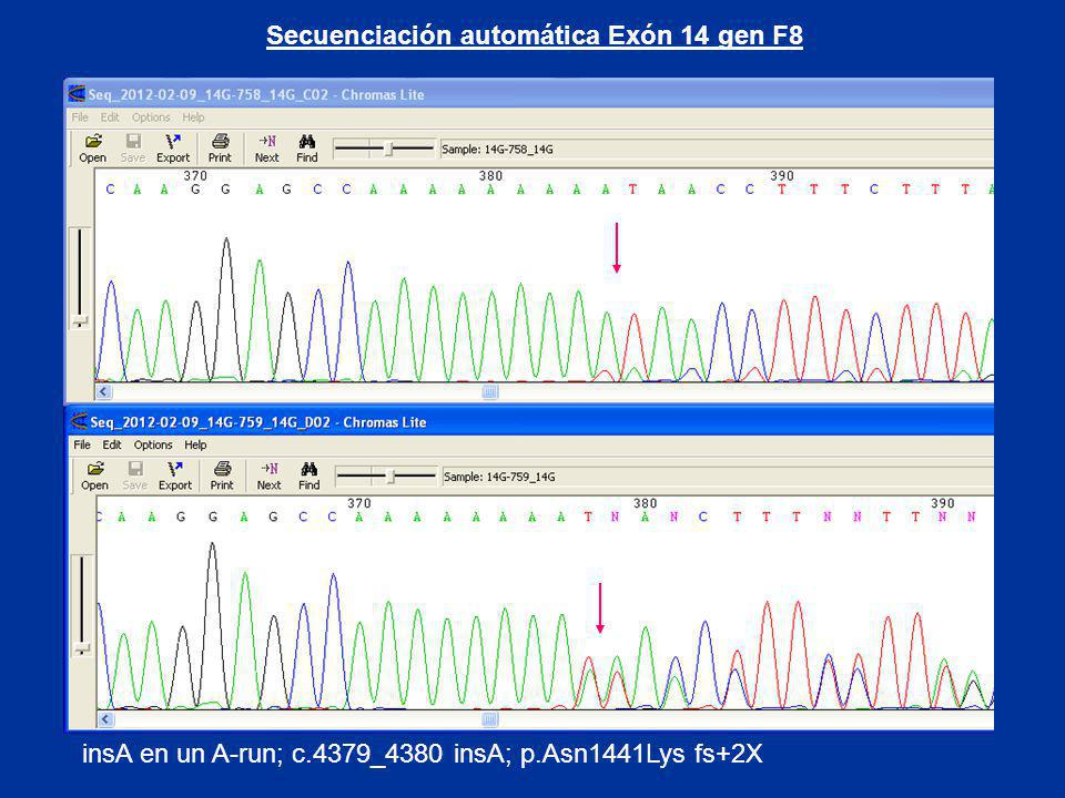 Secuenciación automática Exón 14 gen F8