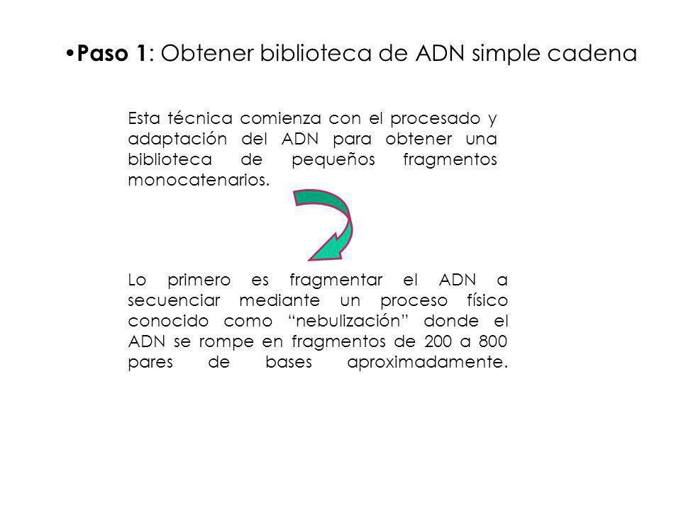 Paso 1: Obtener biblioteca de ADN simple cadena